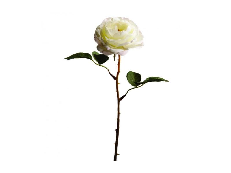 Роза английская в бутоне SIA 010347